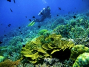 image,bunaken,diving.jpg